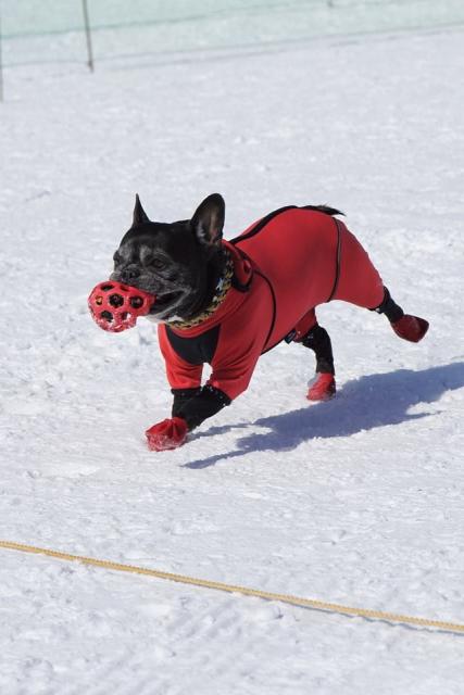 雪上運動会  (11)