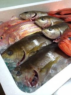 2014・3山口鮮魚
