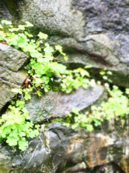 new_new_6s photo-rain-s
