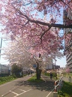 白石サイクリングロード~東札幌3km付近