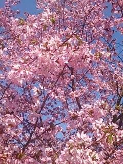 農業試験場~食事処の一本桜
