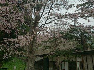 有珠善光寺~寺と桜