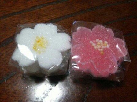 桜が咲いて1