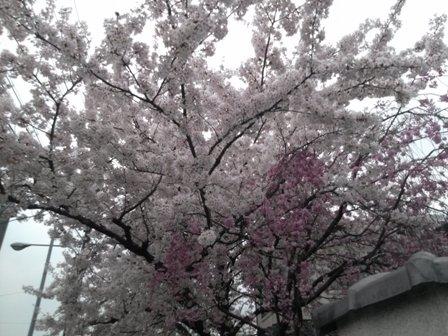 京都で研修07