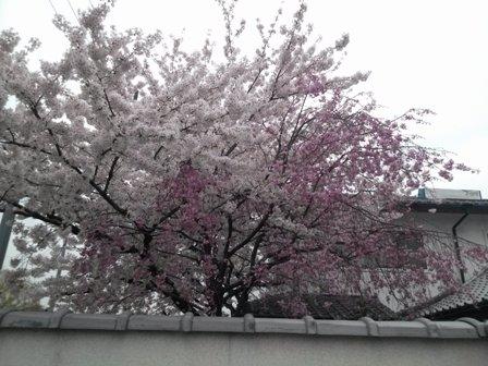 京都で研修08