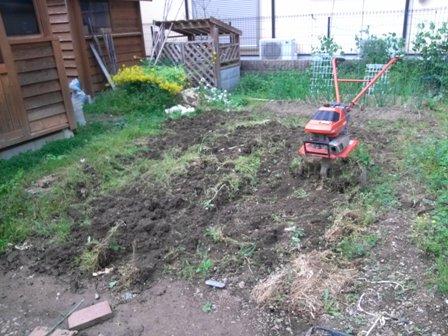 菜園夏野菜準備4