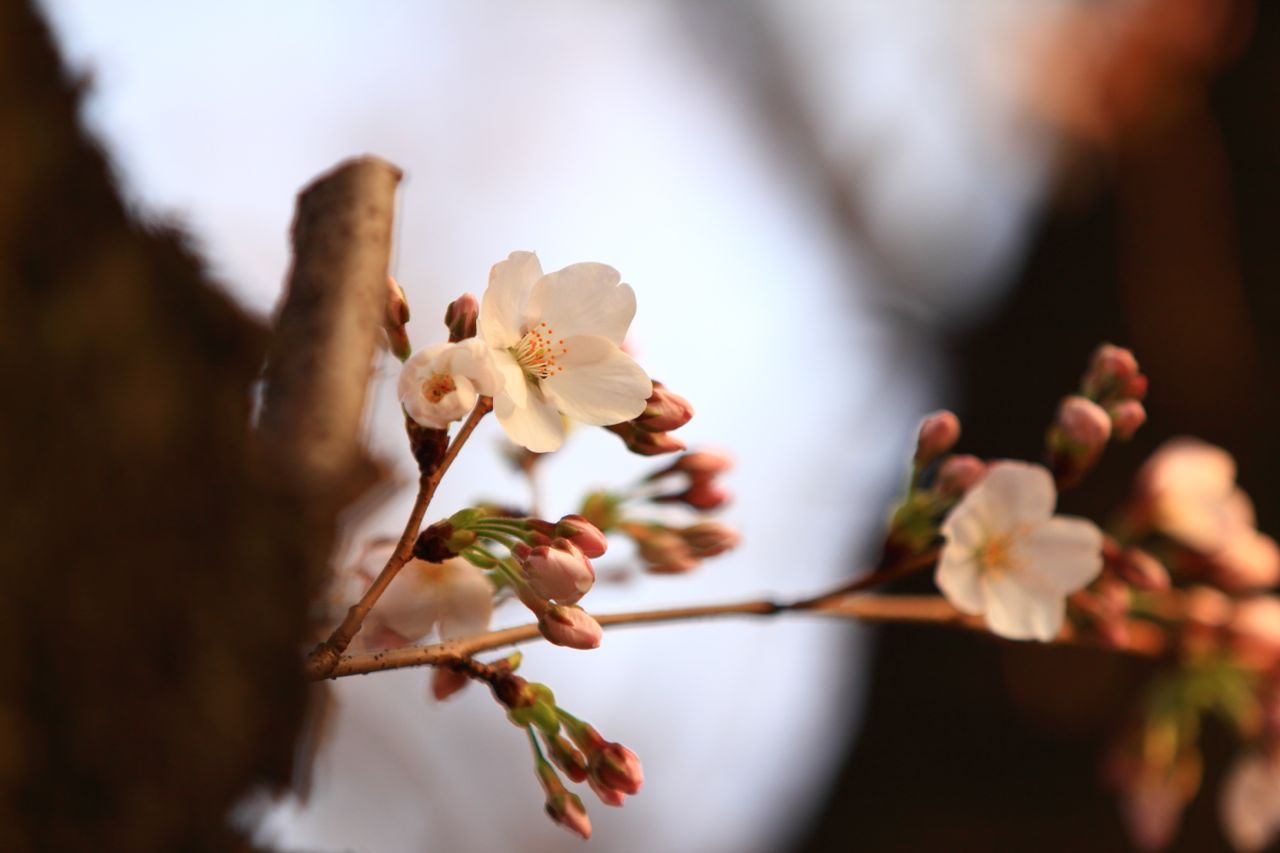 140405sakuraphoto02.jpg