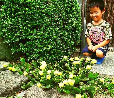 DSCF1913シンとのサボテンの花