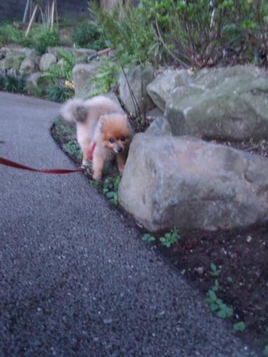 夏のお散歩 2