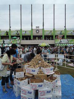 鎌ヶ谷スタジアム!