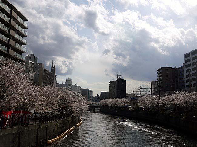 大岡川桜まつり2014