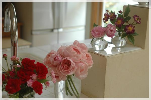 庭のバラをキッチンに飾る