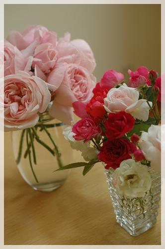 今日のバラ20140523