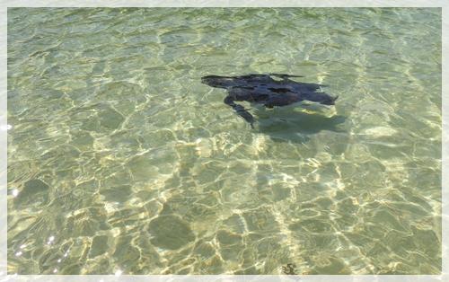 ウミガメが普通にいる