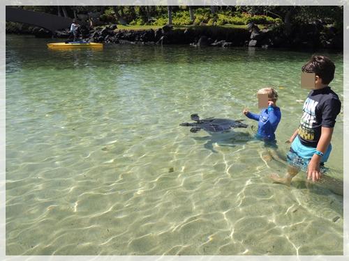 普通にカメが泳ぐ