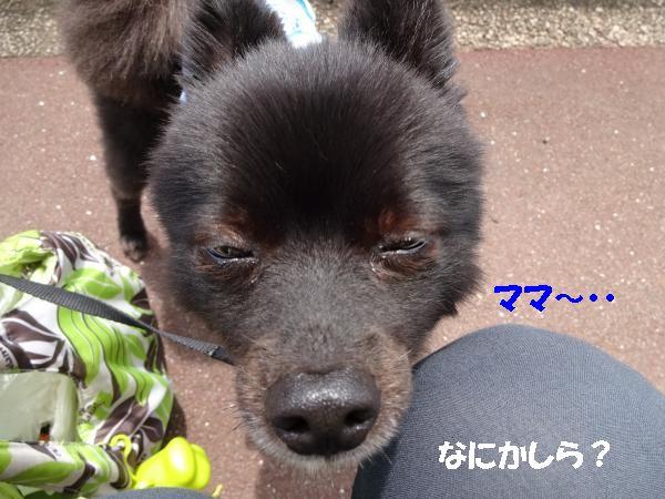 縺・シ狙convert_20140708185342