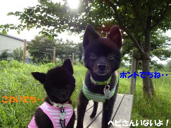 縺ヲ・論convert_20140721205710