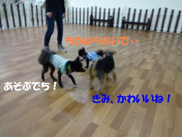 DSC00525_convert_20140618205311.jpg