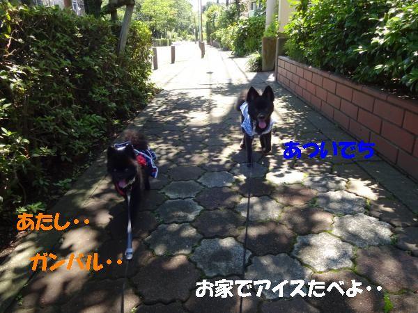 DSC01265_convert_20140712211213.jpg