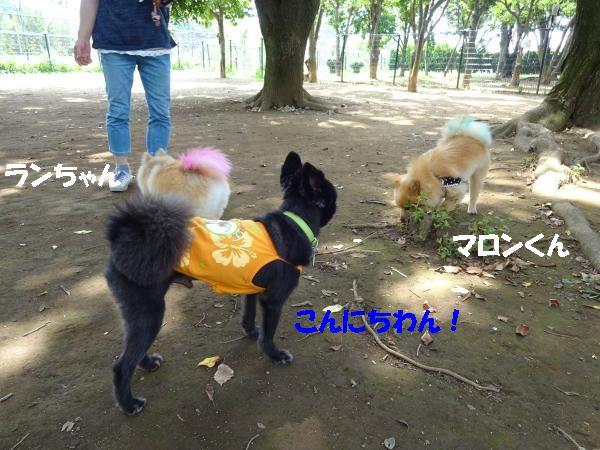 DSC01499_convert_20140716185432.jpg
