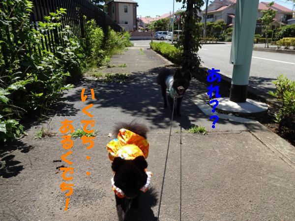 IMG_2224_convert_20140616211047.jpg
