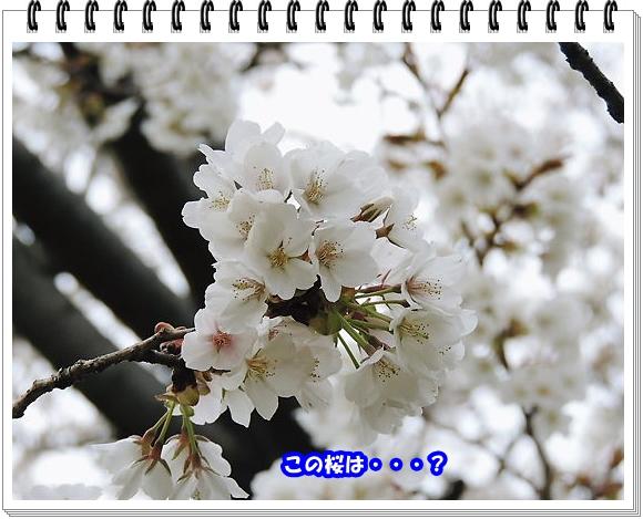 1850ブログNo8