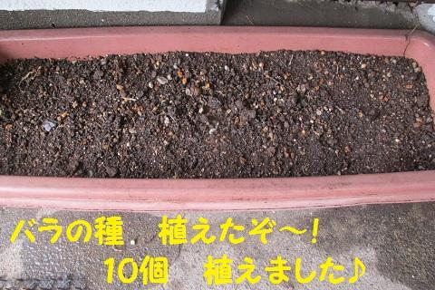 IMG_3136.jpg
