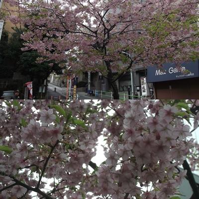 0325桜3