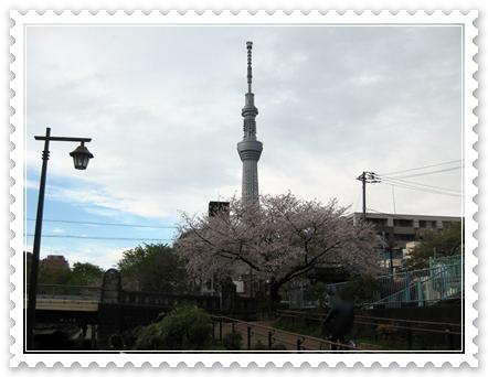 錦糸町 公園 スカイツリー 桜