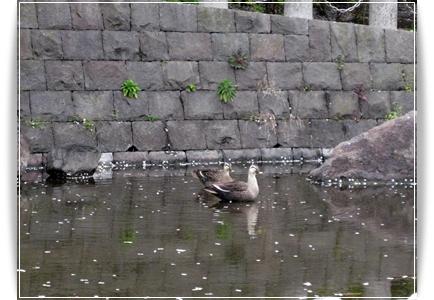 錦糸町 公園 鳥
