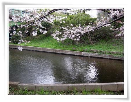 錦糸町 公園 桜