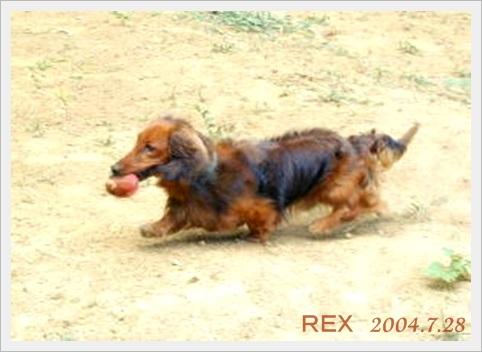 rex040728f_20140527050910fbd.jpg