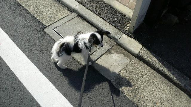 初めてのお散歩(MOGU)