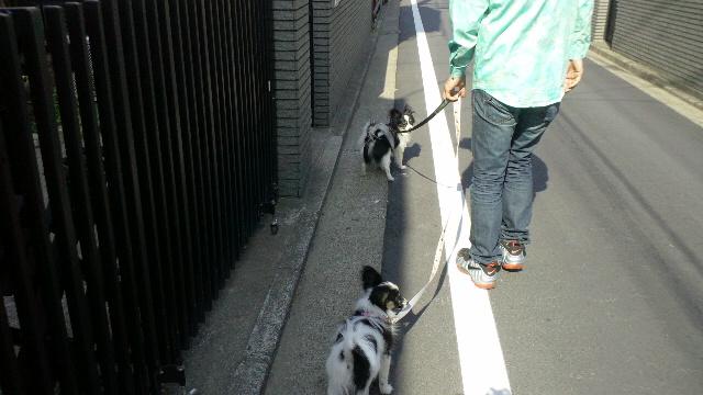 初めてのお散歩(Pimba)