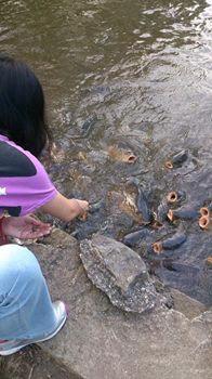 鯉の口に餌を
