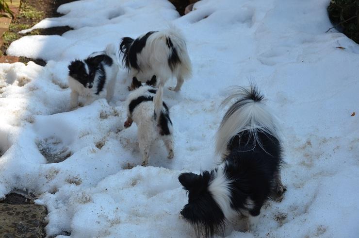 親子で雪遊び