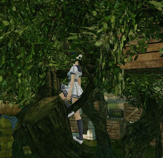 9月8日オリーブの木