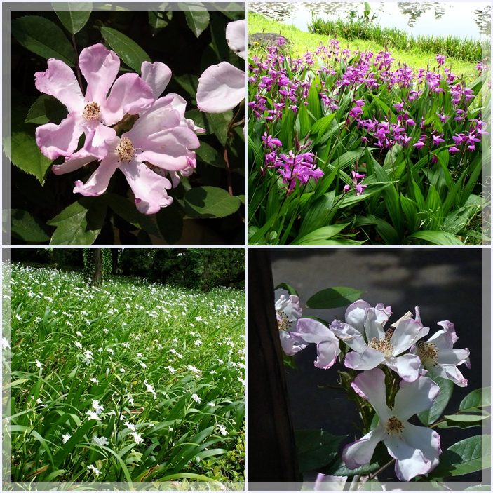 東御苑の花2