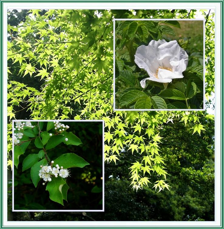 東御苑の花
