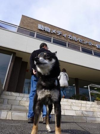 動物病院(0201)2