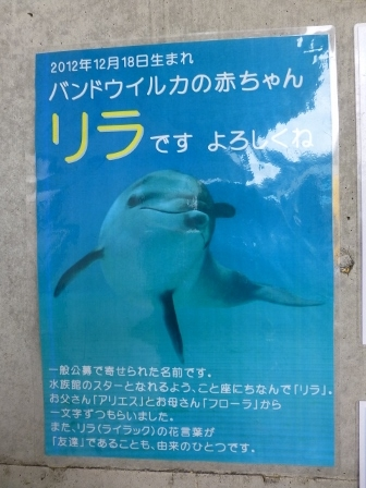 越前松島水族館6