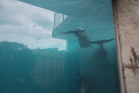 越前松島水族館9