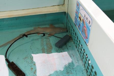 越前松島水族館22