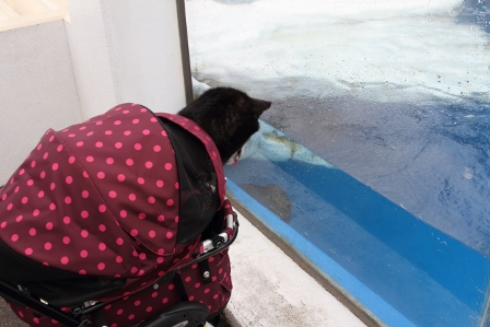 越前松島水族館24