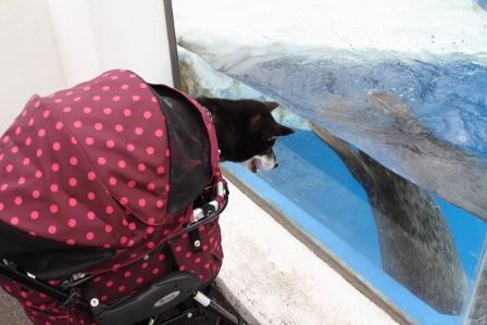 越前松島水族館26
