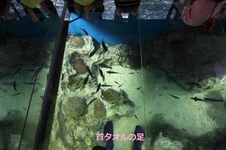 越前松島水族館40