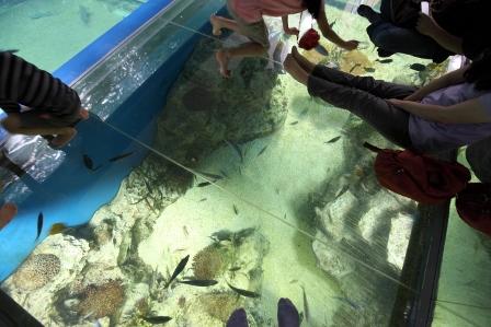 越前松島水族館42