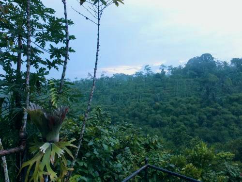 鬱蒼とした太古のジャングル