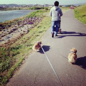 papaと散歩