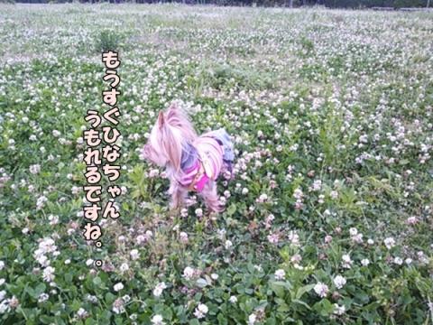 草むしり③